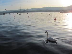 Lake Zürich (Zürichsee).