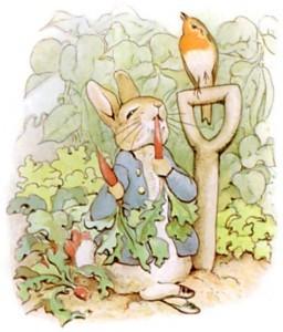 Peter Rabbit in the garden.